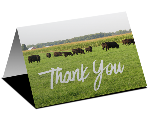Thank You Cards - Summer Pasture